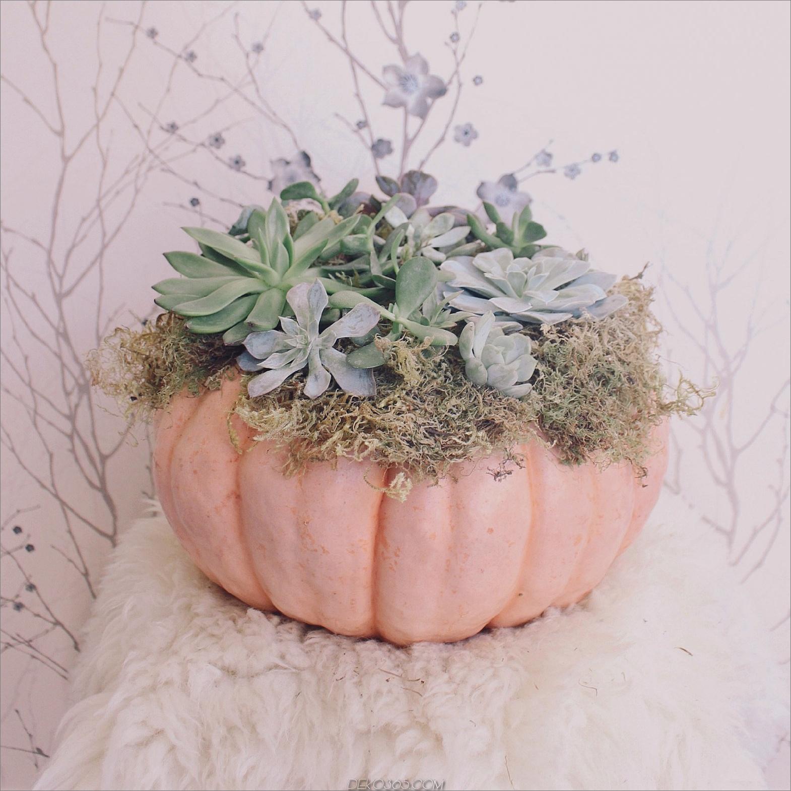 Sukkulentes Halloween 10 Dekorationsideen für eine atemberaubende Halloween-Tabelle