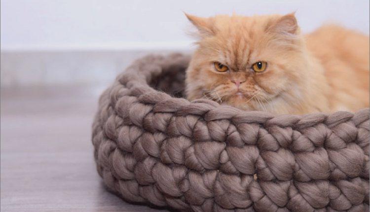 Designer-Katzenbetten für die launischsten Katzen_5c590ba3cc128.jpg
