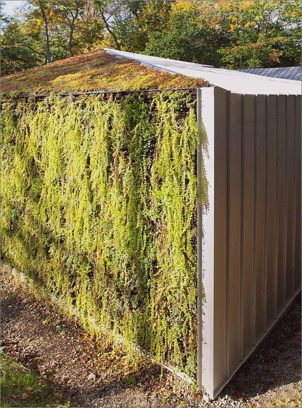 Gartenhaus-mit-üppig-grün-Fassade-3.jpg