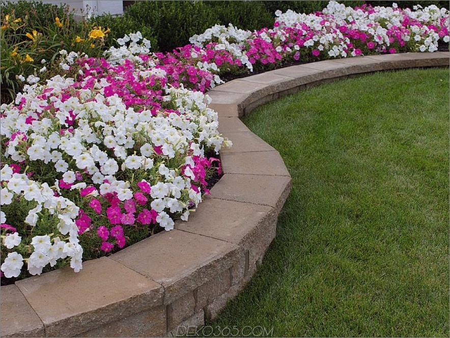 Rosa und weiße Petunien-Blumenbeet mit Felsen-Stützmauer
