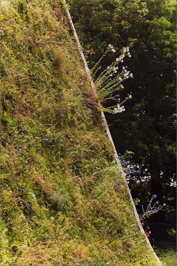 Untergrund-Wellenhaus-mit-Wildblume-und-Kräuteraußen-10.jpg