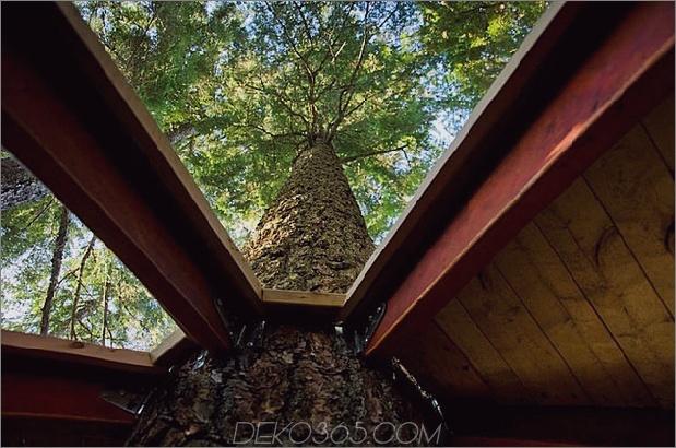 Aufgehängte-Holz-Pod-Kabine-um-Baumstamm-18-Ansicht-up-Kofferraum.jpg