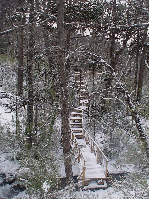 Winterhütte-zugänglich-erhöhte-Gehweg-3-Holz-Weg.jpg